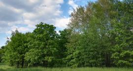 Białołęka może być bardziej zielona - głosujemy na