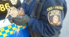 385 zgłoszeń dotyczących dzikich zwierząt na Białołęce - Eko Patrol podsumował półrocze