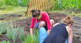 Tworzymy kwietny ogródek w Ogrodach Mehoffera. Włączcie się w jego powstanie!